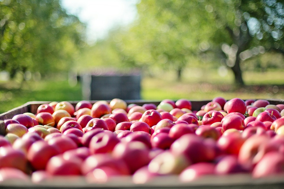 apples-1004886_960_720
